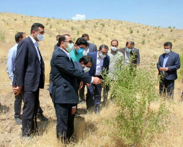 افزایش ۱۰ برابری درآمد کشاورزان با احداث باغات در اراضی شیبدار