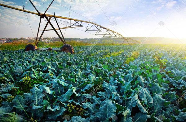 جهش قزوین به سوی کشاورزی مدرن