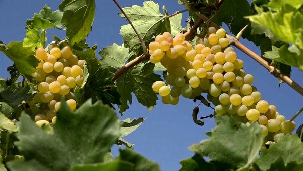 تولید ۲۰ محصول باغی در روستای سردسیری خلیلی در بوئین میاندشت