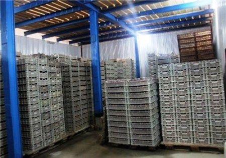 توسعه سردخانهها و انبارهای نگهداری محصولات کشاورزی اردبیل