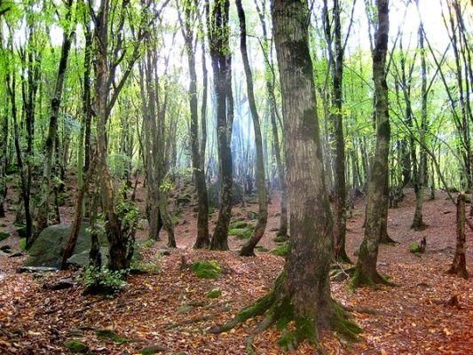 توسعه ۲۵ هزار هکتاری جنگلها در سال جاری