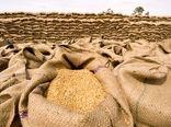 5 استان برتر تولید کننده گندم شناخته شد