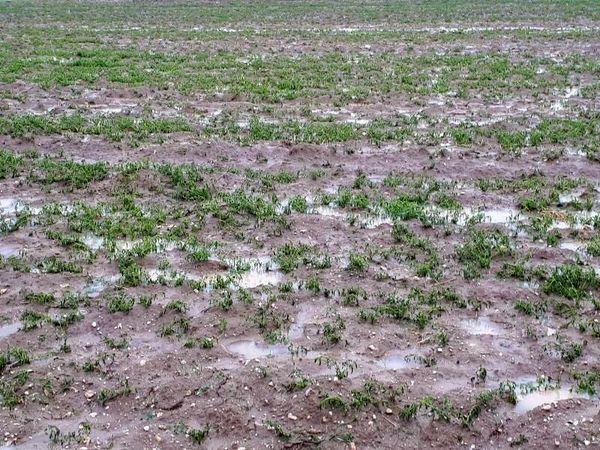 سیل به کشاورزان و دامداران اسفراین خسارت زد