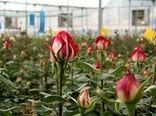 اولین پایانه گل شاخه بریده در منطقه  جنوب شرق استان افتتاح شد