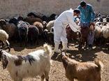 بیش از ۶ میلیون دام و طیور در بوشهر تحت معالجه قرار گرفتند