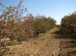 سه محصول کشاورزی شهرستان بوئین زهرا کد شناسایی گواهی شده دریافت کردند
