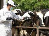 واکسیناسیون بیش از ۲ میلیون دام در چهارمحال و بختیاری