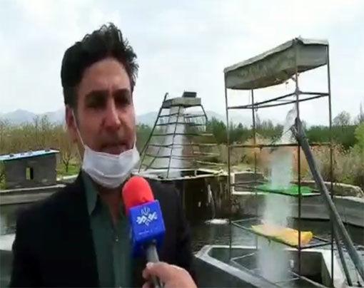 آغاز رهاسازی یک میلیون و ۵۰۰ هزار قطعه بچه ماهی قزل آلا در استخرهای پرورشی مراغه