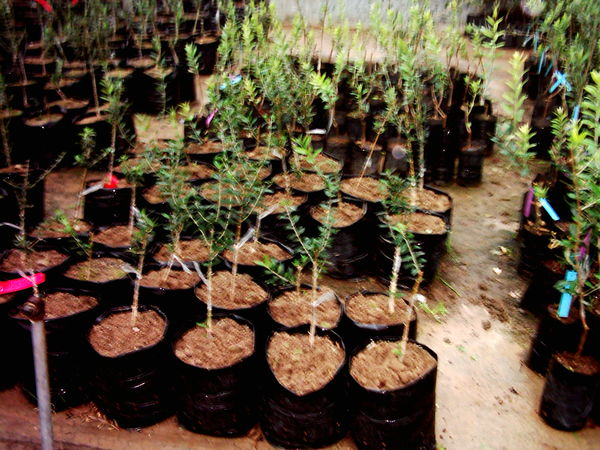 12 نهالستان در شهرستان البرز فعالیت دارند