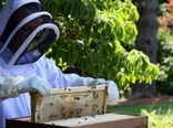 روایتی از نجات زنبورهای عسل در آمریکا