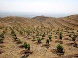 کاشت 14 میلیون اصله در 264 شهرستان در کشور انجام می شود