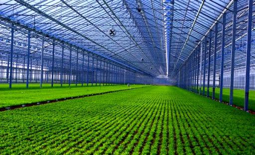100 طرح  عمرانی ویژه بخش کشاورزی در استان قزوین اجرا میشود