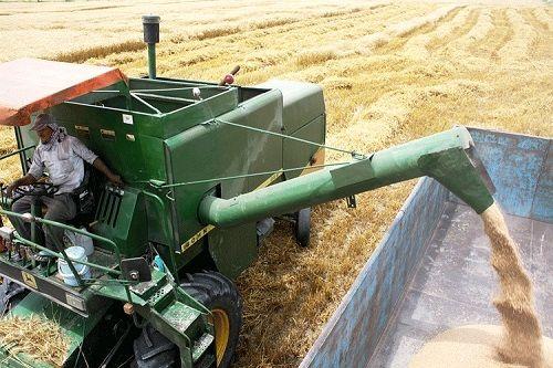 افزایش 20 درصدی خرید گندم در قیروکارزین