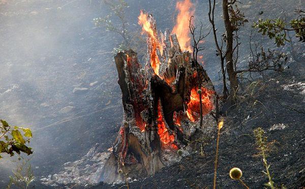 زاگرس میزبان 54 درصد از آتش سوزیهای کشور بوده است