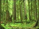 جنگل های هیرکانی در فهرست مناطق امن جهان