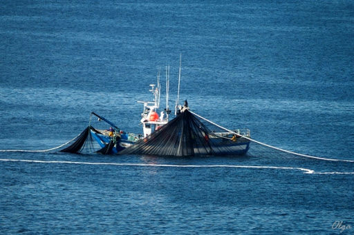 سرمایهگذاری بر شناورهای لانگلاین و پرساینر در صید فراساحل
