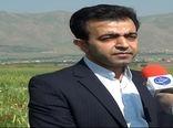 کشت ماشک در ۸۰۶ هکتار از اراضی کشاورزی کردستان
