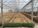 توجه به صادرات محصولات گلخانهای اصفهان ضروری است
