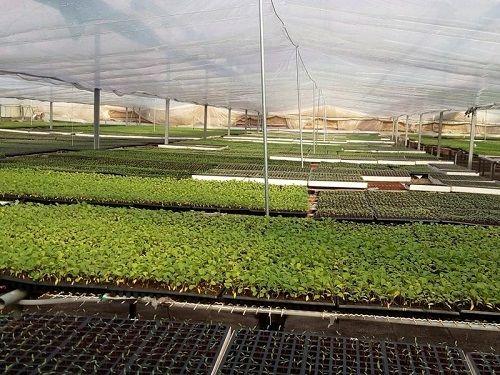 ایجاد اولین گلخانه تولید نشاء مکانیزه در نی ریز