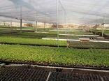اجرای نهضت گلخانه ای، تحول بزرگ در کشت گلخانهای استان