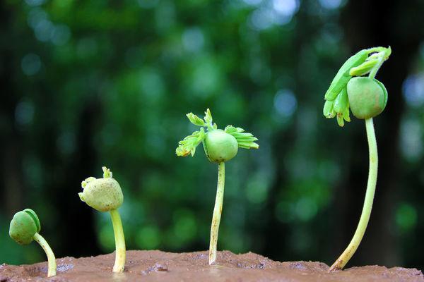گیاهان یکدیگر را به رشد تشویق میکنند
