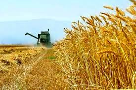 استان اردبیل در تنوع و تولید  بذور اقلیم های مختلف پتانسیل بالای کشوری دارد