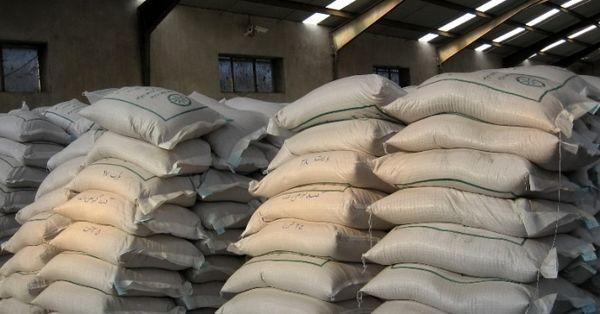 آغاز توزیع بذر گواهی شده گندم در مرودشت