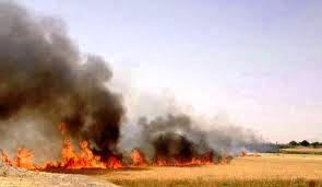 آتش زدن بقایای گیاهی جرم است