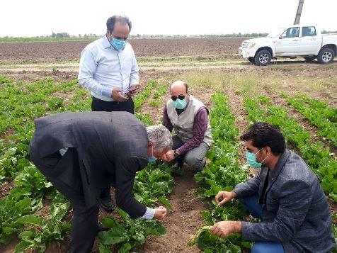 مراقبت جدی از مزارع گندم و جو در مرحله رشد فیزیولوژیکی و اقدام هوشمندانه برای تغذیه گیاهی