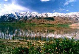 رونق اقتصادی گیاهان دارویی در بام ایران
