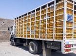 بیش از ۱۱ تن مرغ زنده قاچاق در ایلام کشف شد