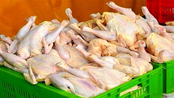 تکذیب پرکشیدن قیمت مرغ در اصفهان