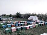 از سرگیری تولید عسل در شهرستان مراغه با شروع فصل شکوفه