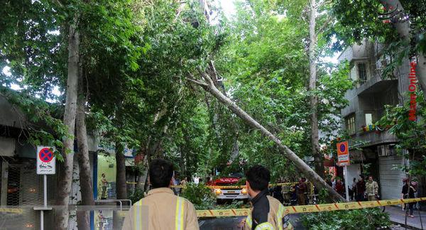 طوفان فقط چند درخت جوان را از ریشه درآورد