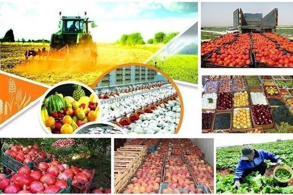 رشد ٣٢ درصدی صادرات محصولات کشاورزی