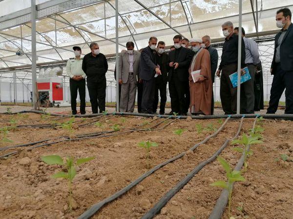 گلخانه تولید فلفل دلمهای در شهرستان بروجن افتتاح شد