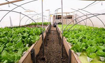 احداث گلخانه یک هزار هکتاری و شهرک شیلاتی 50 هکتاری در پایاب سدحاجیلارچای