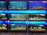 تولید ۱۷۰ گونه ماهی زینتی در استان اصفهان/ صادرات به اروپا کلید خورد