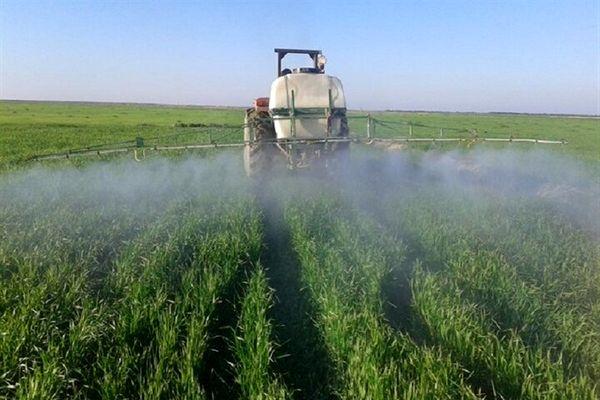 مبارزه با عوامل خسارتزای گندم و جو در مزارع شهرستان قدس