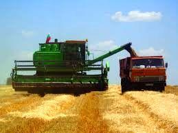 رشد ۲۵ درصدی قیمت گندم در بلغارستان