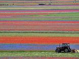 کشاورزی در دشت بزرگ کستل وکیو در ایتالیا