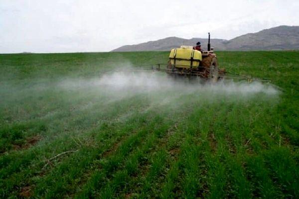 ۴۵ هکتار از مزارع اشنویه علیه آفت سن غلات سمپاشی شد