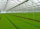 استفاده از فناوریهای نوین در اجرای طرح گلخانه در شهرستان ورامین