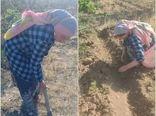 زنان روستایی قزوین کشت زعفران را آغاز کردند