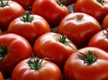 خرید 162 هزار تن گوجه فرنگی برای حمایت از کشاورزان
