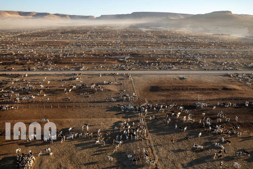 کشاورزی قرن 21