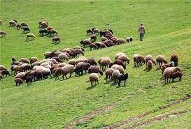 تمدید مهلت برای صدور مجوز چرای دام در مراتع خراسان شمالی