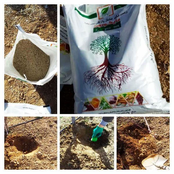 توزیع ۴۰۰ کیلوگرم قارچ مایکوریزا در باغات شهرستان سامان