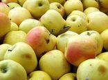 گردش مالی ۸ درصدی سیب صنعتی در آذربایجان غربی