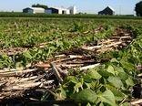 طرح بهبود پوشش گیاهی در شهرستان دامغان اجرا شد